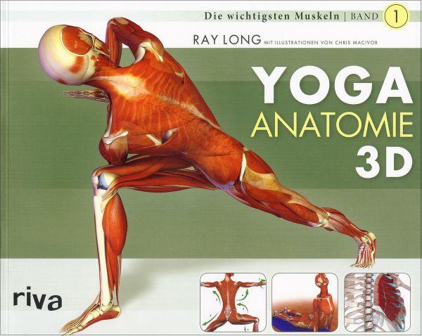 Yoga Anatomie 3D - Die wichtigsten Muskeln
